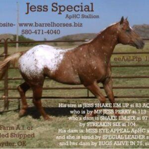 Jess Special ApHC