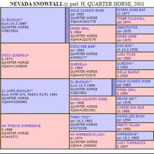 Nevada Snowfall  AQHA/APHA