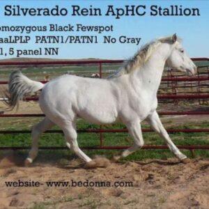Silverado Rein ApHC